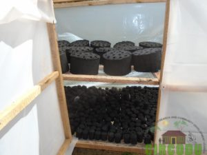 Freshly made briquettes in the drier